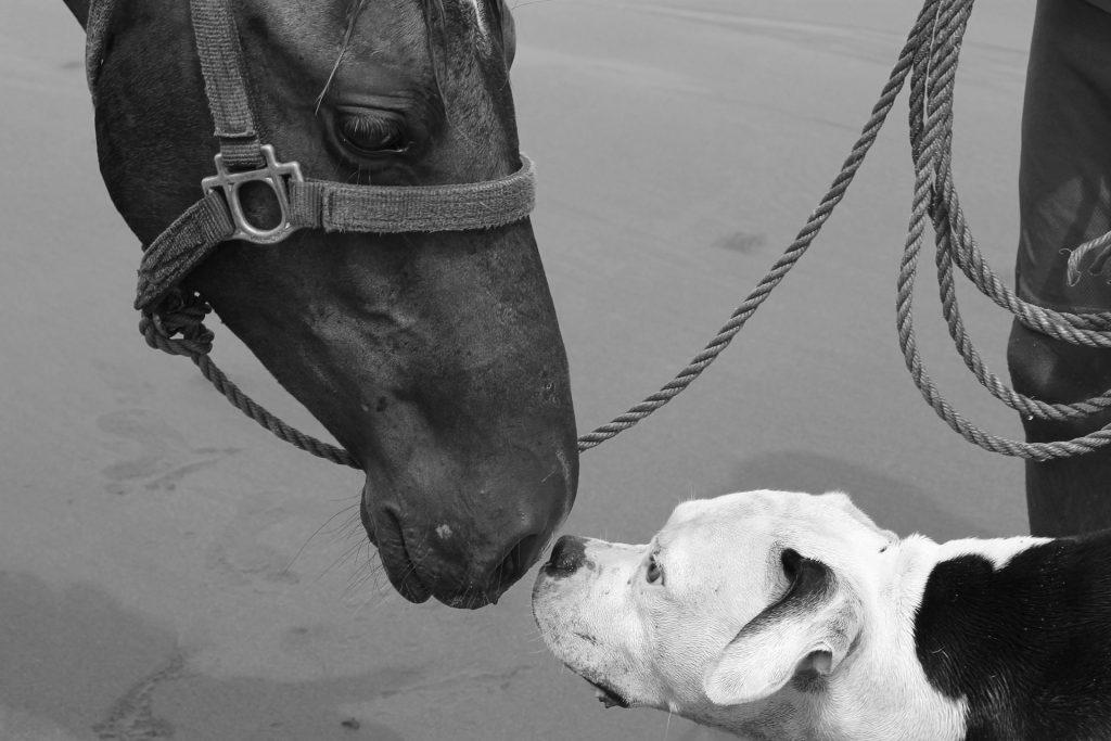 chiropractie voor paard en hond