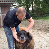 hond chiropractie