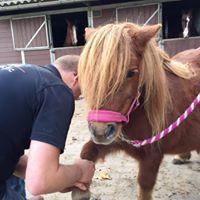 chiropractor pony